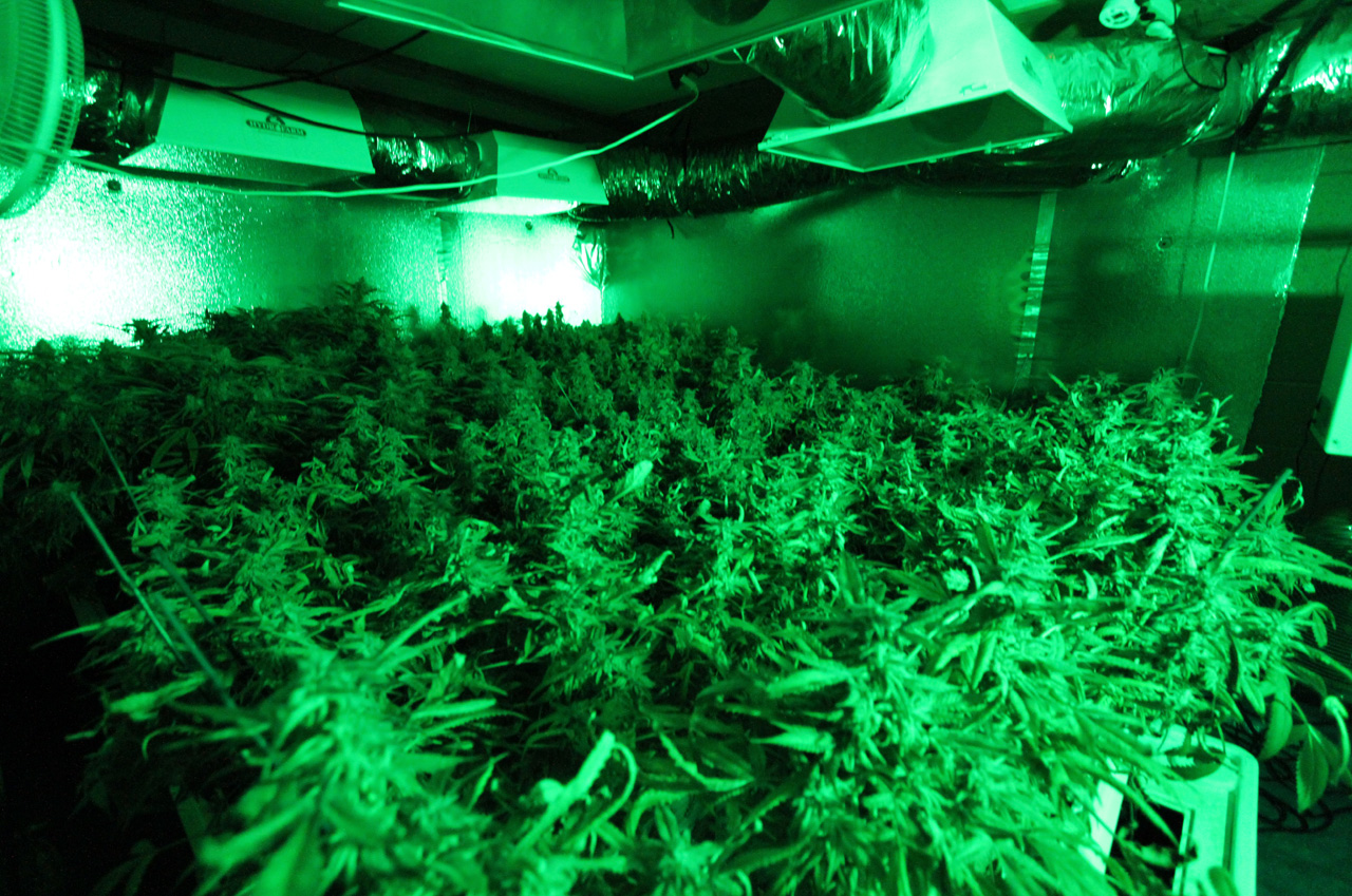 The Company Behind Miracle-Gro Wants To Help You Grow (Legal) Hydroponic Weed