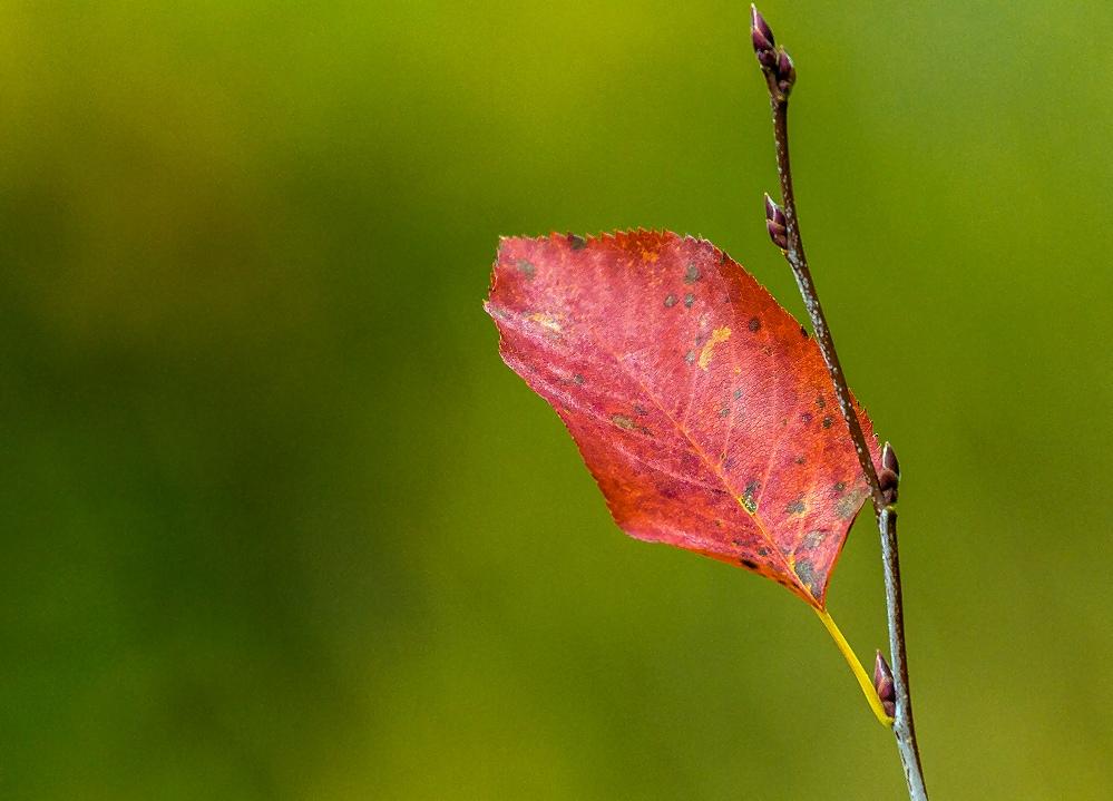 Consumerist Friday Flickr Finds
