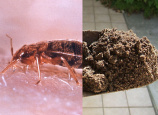 Those Aren't Bedbugs, Says Ohio Travelodge. They're Dirt!