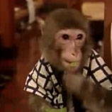 Japan Introduces Monkey Waiters; Blogger Scratches Another Business Plan Off His List