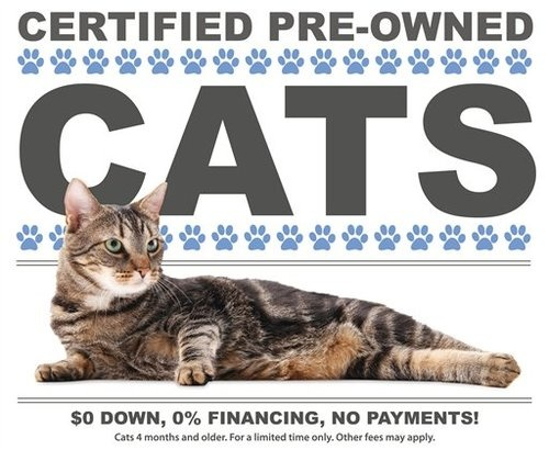Certified Pre-Owned Cats: Inspected, Detailed, Better Than New!