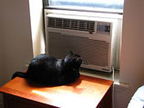 CSR: Buy Some Window A/C Units From Sears While You Wait For Sears To Repair Your Central Air!