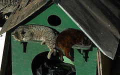 As Miami Homes Enter Foreclosure, Cats Move In