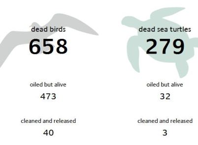 Keep Track Of BP Oil Spill Casualties With DailyDeadBirds.com