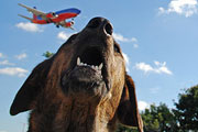 Your Dog May Not Be Welcome On Summer Flights