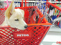 100 Animals Die At Petco In Flood, Company Blames City