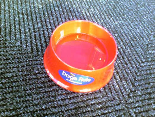 Commerce Bank's Hot Dog Water Dish
