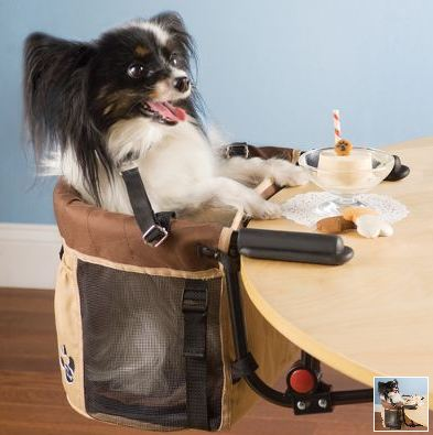 Should Dogs Be Allowed In Places Of Business?