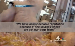 NYC Pet Stores Linked To Midwest Puppy Mills