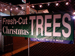 Dept. Of Agriculture Announces Christmas Tree Tax To Help Promote Christmas Trees