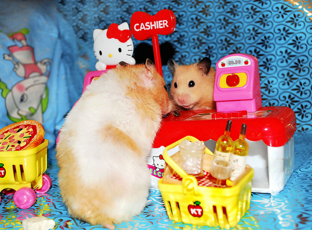 Caption These Hamsters Shopping