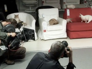 What Happens When You Let 100 Cats Loose Inside An IKEA?