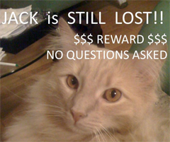 2 Months In, Searchers Still Seek Jack The Cat Lost At JFK