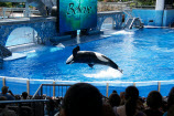 OSHA Goes After Sea World For Killer Whale Incident