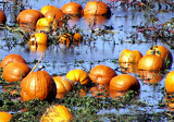 Potential Canned Pumpkin Shortage Threatens Thanksgiving