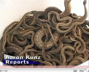 Realtor Slices Price On Snake Infested Home