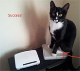 Cat Naps On Router, ISP Provides Decoy Router In Exchange For Cat Pictures
