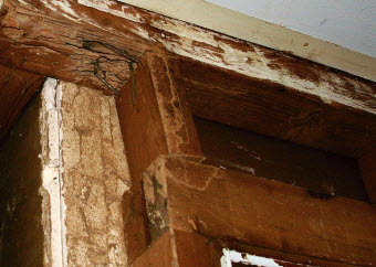 How To Find Out If Your Home Is A Termite Meal