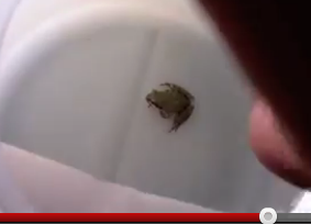 Customer Finds Live Tree Frog In Salad Bought At Costco