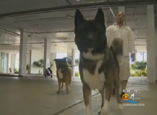 Yet Another Condo Complex Requires Tenants To Provide Doggie DNA