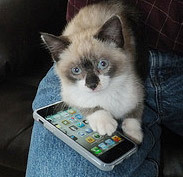 Experts recommend carrying a commando kitten to guard your iPhone at all times.