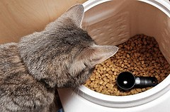 Natura Pet Recalls Four Brands Of Cat And Dog Foods For Possible Salmonella Contamination