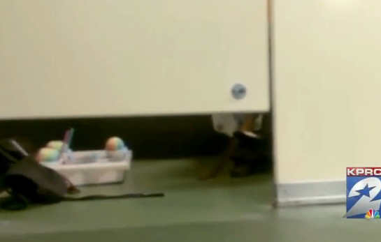 VIDEO: Stadium Vendor Takes Sno-Cones With Him Into Bathroom Stall