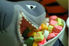 This shark is a candytarian. (Alan Rappa)