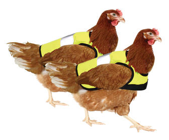 Obviously Your Urban Chickens Need $20 Reflective Safety Vests