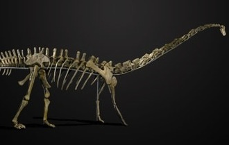Oh Heck Yes: You Can Buy A Dinosaur Skeleton If You've Got $640,000 Or So To Spare