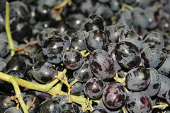 Great, Now We Have To Worry About Black Widow Spiders Hiding In Grapes