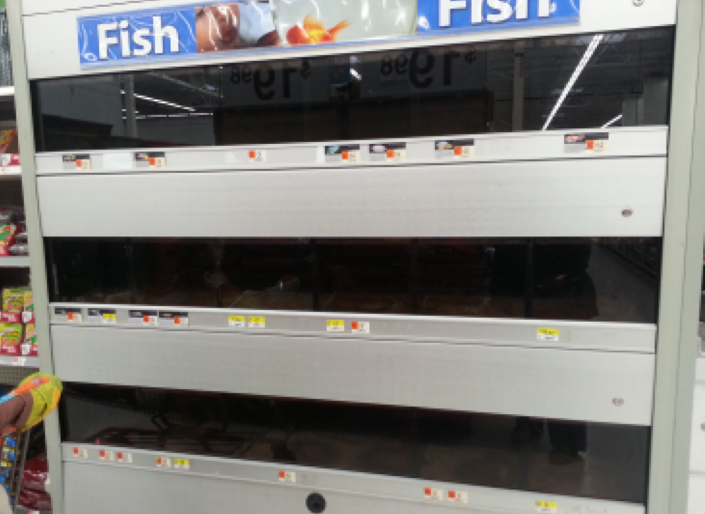 Walmart shoppers in NJ snapped this photo of filth-darkened tanks that still contained dead and living fish. (Photo: Dina Ely/Patch.com)