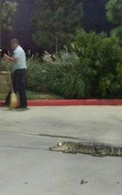 Even Alligators Have Cravings For McDonald's Sometimes