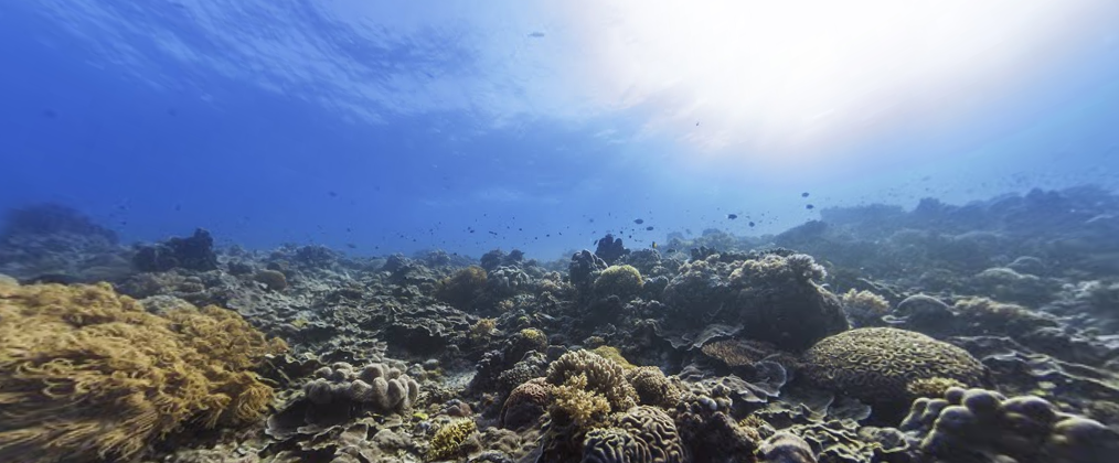 Google Maps Adding Underwater Photos Of World\'s Oceans To Street ...