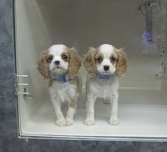 These puppies are neither sick nor underage to my knowledge. Just cute and puppies from The Shining. (ChrisGoldNY)