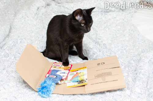 A Sad Cat Looking At An Envelope