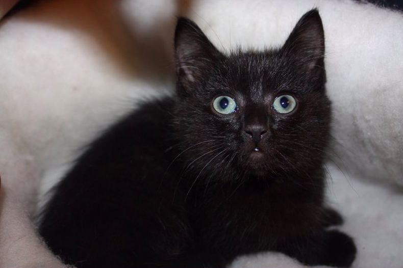 (catastrophegirl) & Uber Will Bring A Kitten To Your Door Today (If You Live In The ...