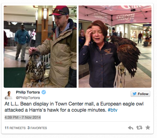 L.L. Bean Learns Nature's Lesson The Hard Way When Event Featuring Two Birds Of Prey Goes Awry