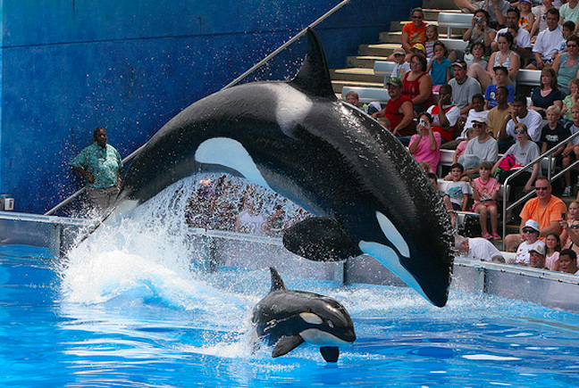 "SeaWorld San Diego Will Phase Out ""Shamu Show"" For One With A ""Conservation"" Message"