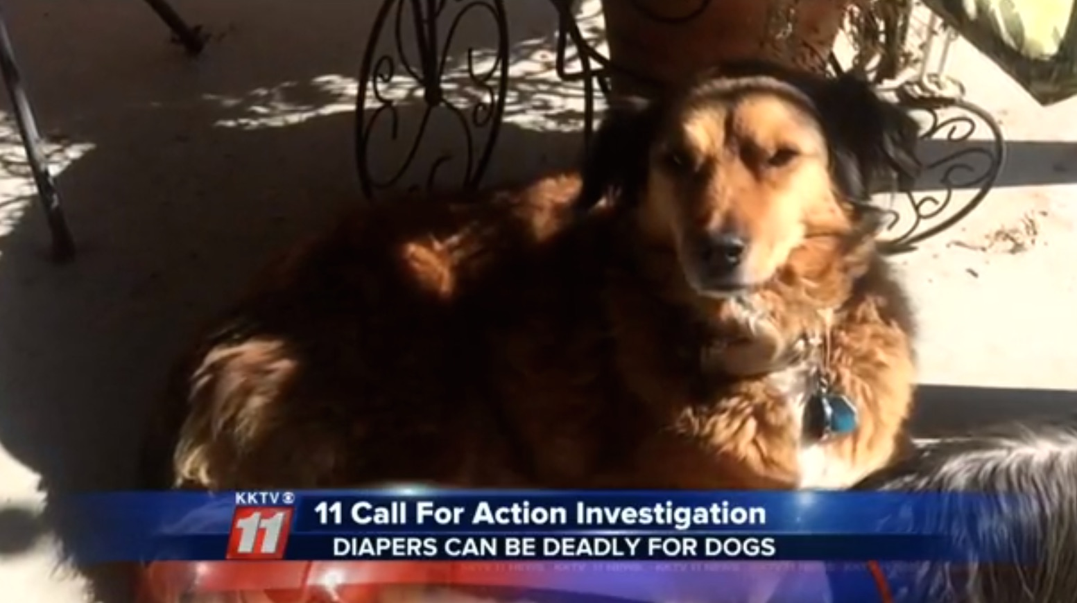 Ginger the dog died  after eating part of a baby's diaper.