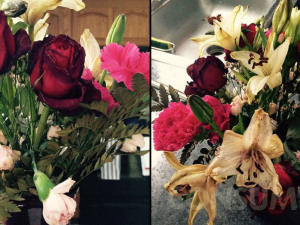 Valentine's Day Aftermath: Floral Disaster And Floral Delight