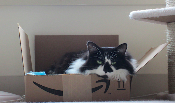 You can pay cats to write Amazon reviews, but they're all very negative. (DJHeini)