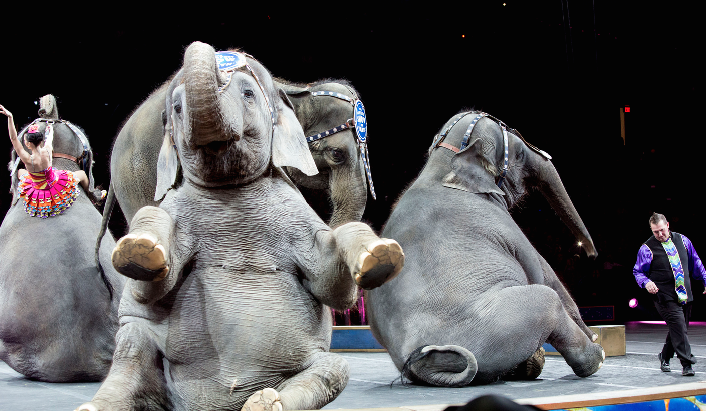 Ringling Bros. Elephants Being Granted Early Retirement