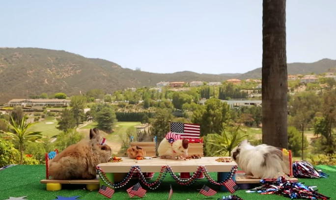 Watch The Tiny Hamster At A Tiny Barbecue With His Tiny Friends (Because It's Wednesday)