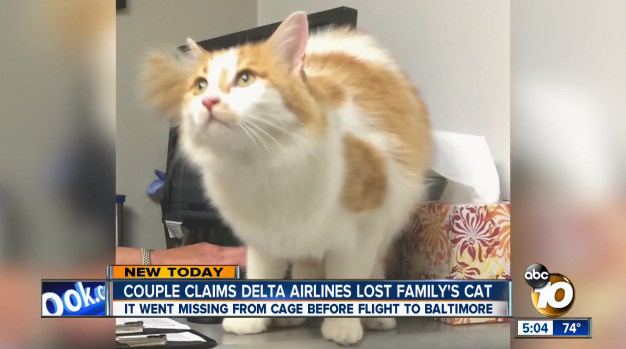 A family says Delta Air Lines failed to secure the cage their cat was in during transport, leading the animal to escape.