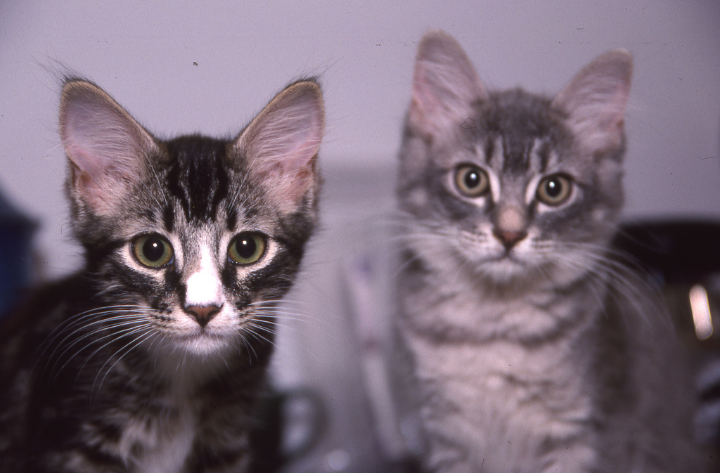 These kittens want you to get a kitten. (Great Beyond)