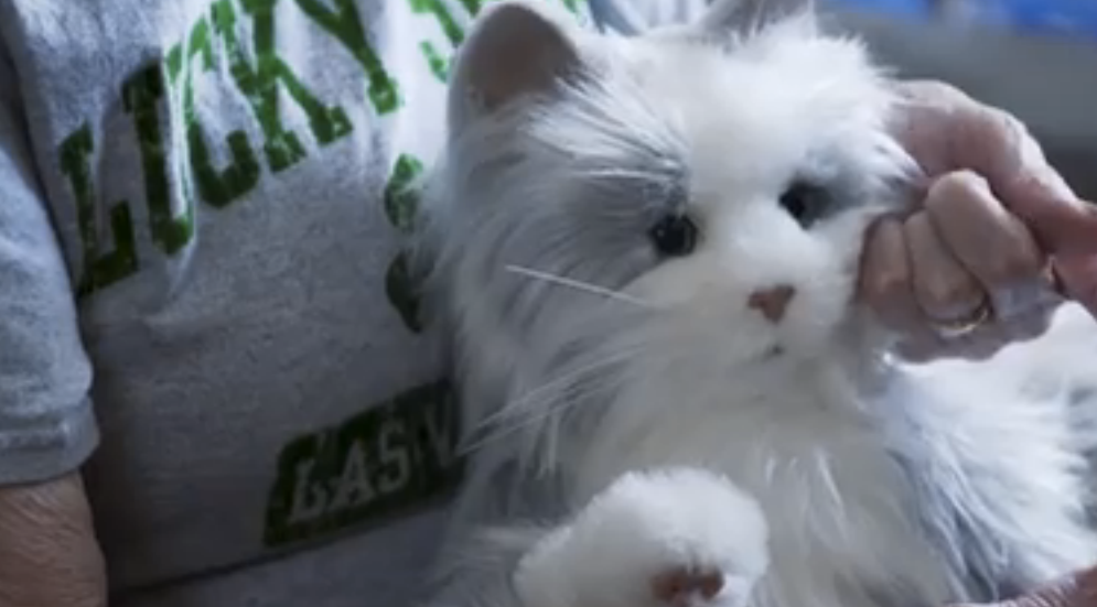 Hasbro's Latest Venture Brings Toy Cats To Life To Be Companions To The Elderly