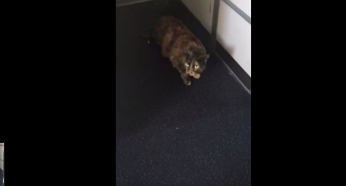 Cat Gets Loose On Delta Air Lines Flight, Tries To Realize Dream Of Being A Flight Attendant