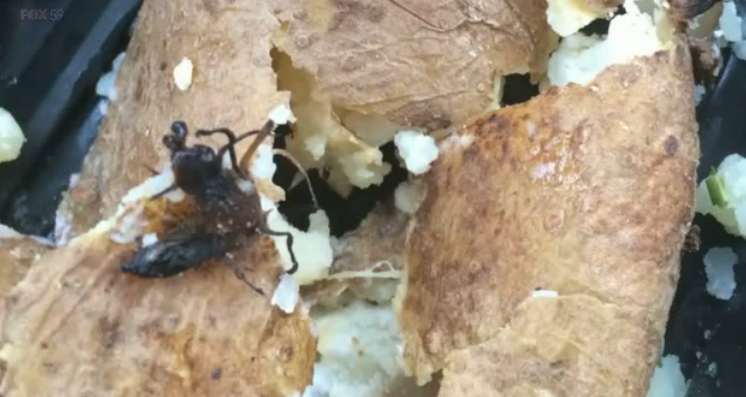 Wendy's Customer Says She Found Bugs In Baked Potato; Restaurant Says They Are Sprouts
