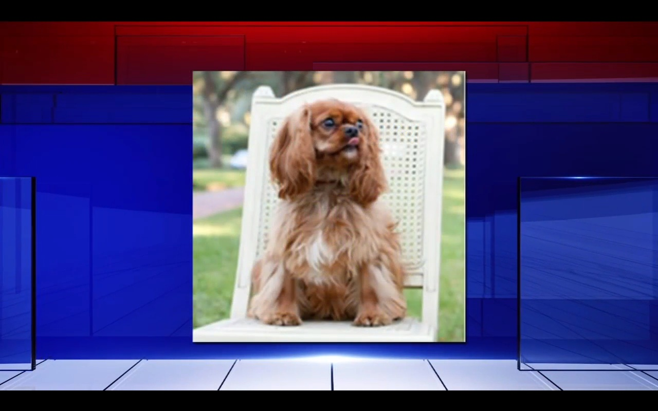 Family Says 5-Year-Old Dog Died In United Cargo Hold